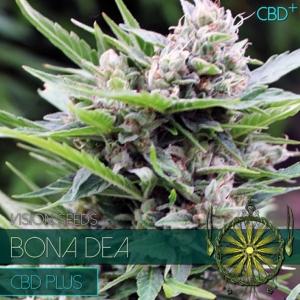 Vision Seeds - Bona Dea CBD 3 Fem
